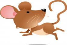 男鼠女鸡两人的属相在一起会怎么样?(图文)