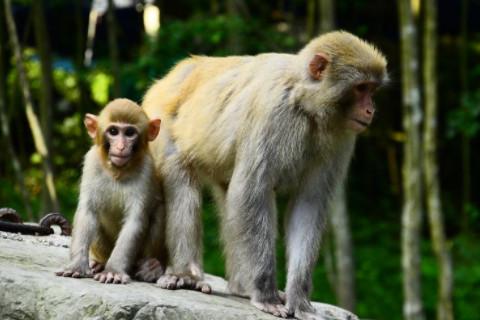 2016年属猴男女2021年运程  5岁生肖属猴男女2021年每月运势
