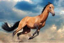 1990年属马人2021年运程 牛年命运如何