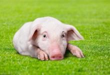 2020年10月属猪人运势分析(图文)