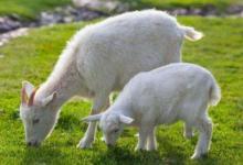 1991年属羊人2021年运程  牛年命运如何