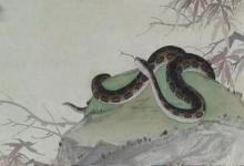 女蛇男龙婚姻最终会怎么样?(图文)