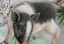 属猪2020年11月运势分析(图文)