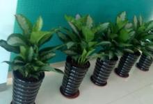 办公室植物四大风水摆放禁忌