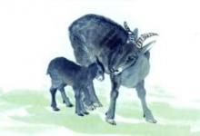 女羊男兔的婚姻怎么样 属羊女是什么性格?(图文)