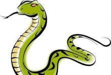 1989年属蛇2021年结婚好吗?89年出生的32岁属蛇的人可以结婚吗?