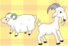 1991年属羊人2021年命运如何 如何化解犯太岁