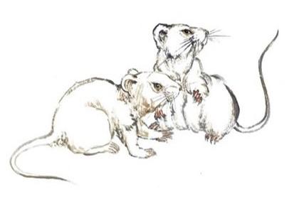鼠男有女朋友会出轨吗 鼠男怎么处理出轨