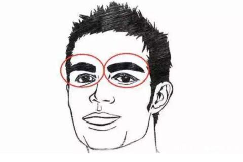 眉毛粗的人面相分析