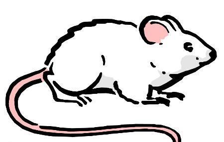 属鼠的女孩未时出生的女孩命运怎么样