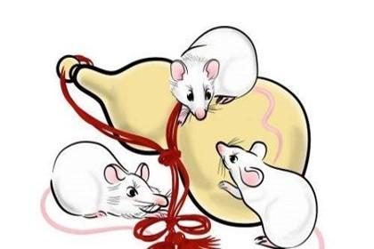 鼠年的宝宝上午出生好还是下午