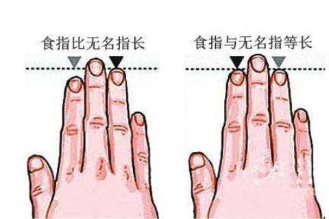 无名指和食指之间的关系