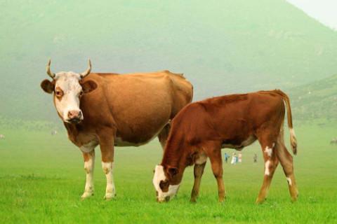 属牛人在2020年12月的运势分析