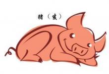 不同年份的属猪运势分析