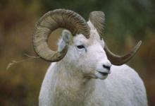 不同年份属羊男女在2021年的运势分析