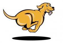 属狗人2021年运势以及运程  2021年属狗人适合佩戴什么吉祥物