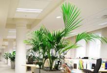 办公室植物摆放注意事项