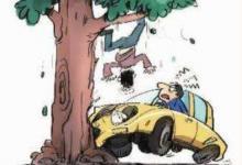 梦见开车撞树