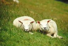 1979年属羊人最倒霉的年纪