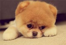 如何为狗狗取名?(图文)