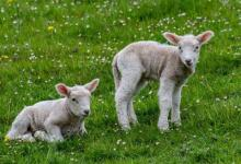 属羊人2021年运势以及运程  2021年属羊人适合佩戴什么吉祥物