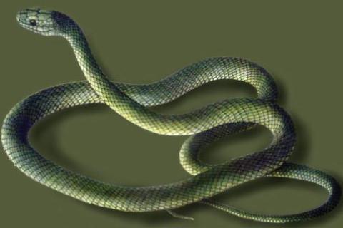 女人梦见蛇缠身