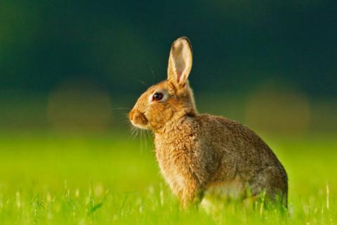 兔年什么时辰出生命好