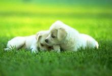做梦梦见了狗