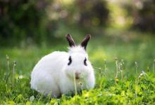 属兔的和什么属相相配