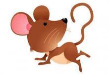 属鼠人的属相婚配表