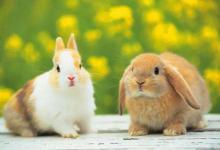 兔年出生的人性格和运势