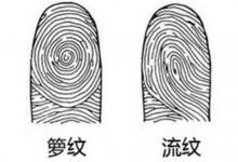 指纹算命:如何分辨箩纹和箕纹