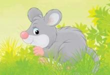 鼠年出生的人性格和运势