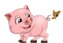 属猪的最佳配偶是什么