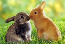 兔年什么时辰出生命苦
