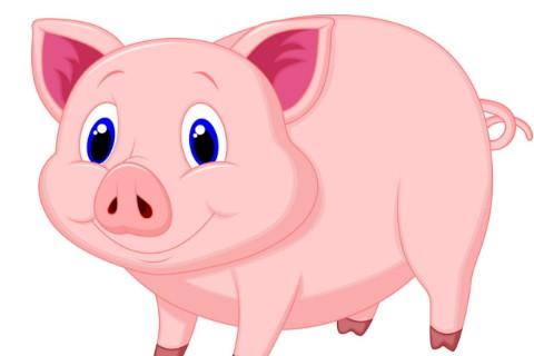属猪人2021年全年运势详解 属猪2021年运势及每月运程