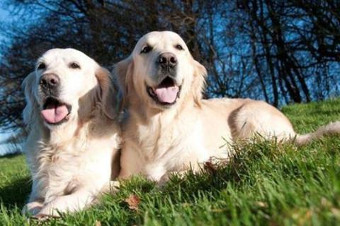 属狗人的婚姻与命运如何?