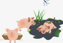 梦见猪圈是什么意思?