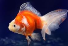 梦见鱼吃人是什么意思?