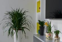 客厅植物摆放风水怎样?