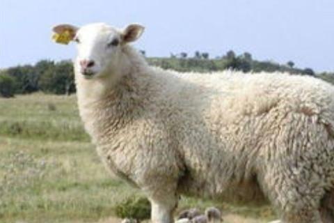 不同年份属羊人2022年全年运势详解