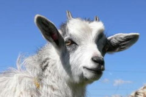 属羊人2022年全年运势详解