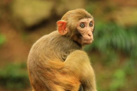 属猴人2022年全年运势详解
