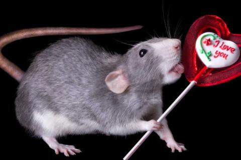属鼠人2022年全年运势详解