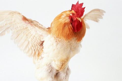 属鸡2022年年运势及运程每月运程