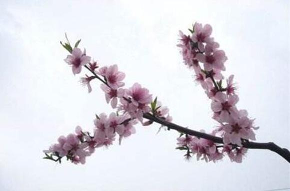 什么样八字有桃花