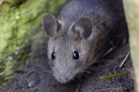 不同年份的属鼠人2022年全年运势详解
