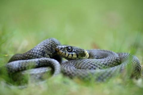 属蛇人几点出生的最好?