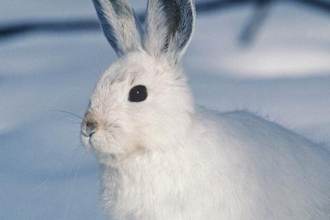 属兔人2022年全年运势详解