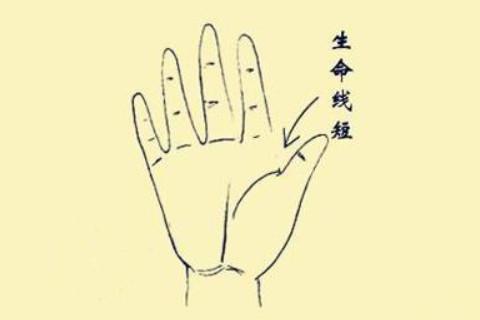 怎么通过手纹看健康?